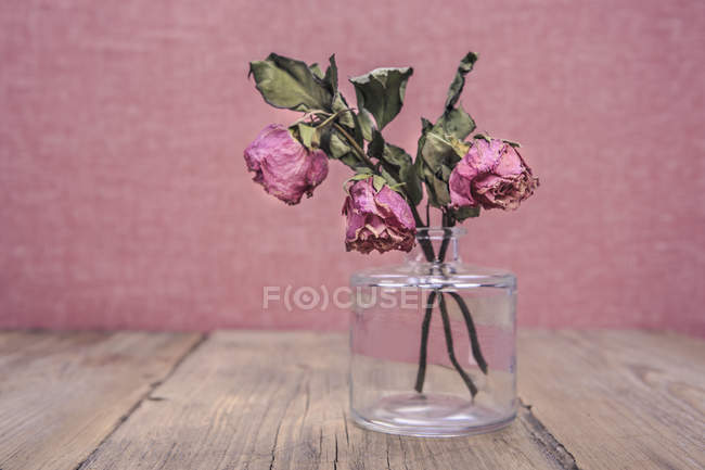 Glass vase with three withered rose — Stock Photo
