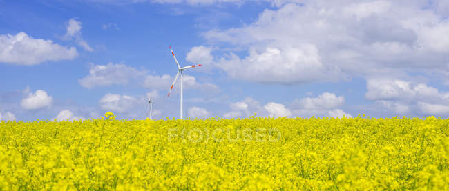 Німеччина, Баден-Вюртемберг, Tomerdingen, вітер парку в гвалтують сферу в сонячний день — стокове фото