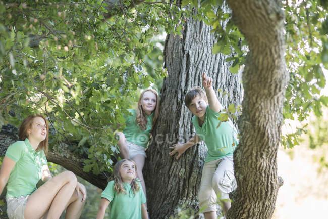 Quatro crianças assistindo algo na árvore — Fotografia de Stock