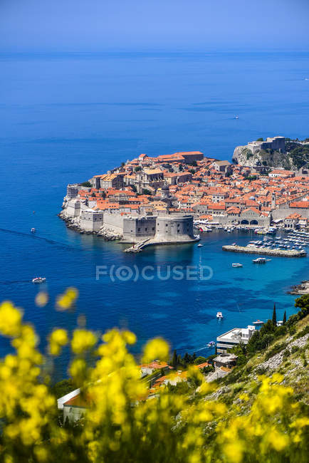 Kroatien, Dubrovnik, Blick auf die Altstadt von oben, gelbe Blumen im Vordergrund — Stockfoto