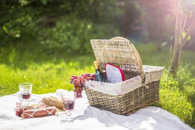 Picknick auf dem Rasen mit Trauben, Wein, Käse, Wurst und braed — Stockfoto