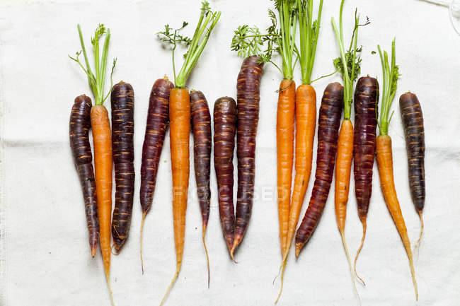 Свежая морковь и фиолетовый туман — стоковое фото