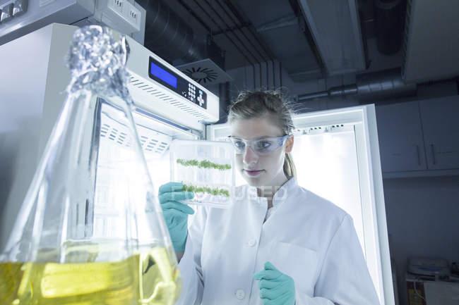 Junge Wissenschaftlerin bei der Untersuchung von Proben im biologischen Labor — Stockfoto