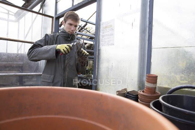 Молодий садівник на роботі, обрізання завод — стокове фото