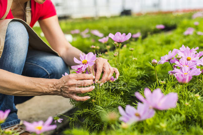 Woman in nursery examining flower — Stock Photo