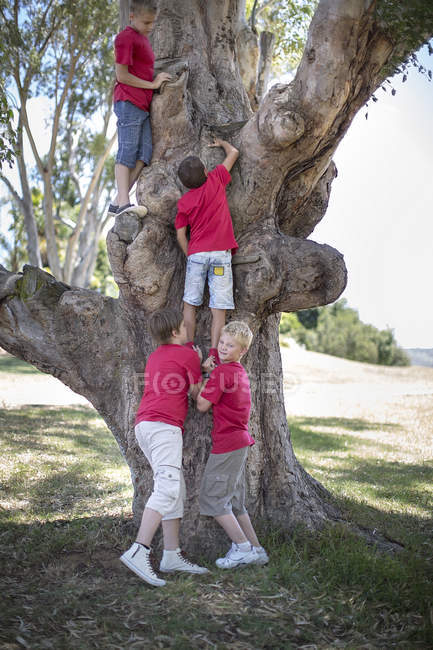 Мальчики на прогулке по дереву — стоковое фото