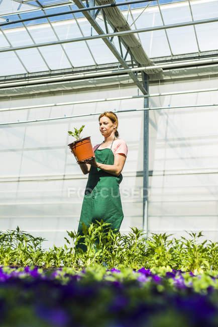 Woman in nursery holding flower pot — Stock Photo