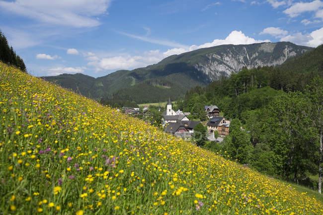 Austria, Lower Austria, Mostviertel, Eisenwurzen, Goestling, flower meadow in Lassing during daytime — Stock Photo