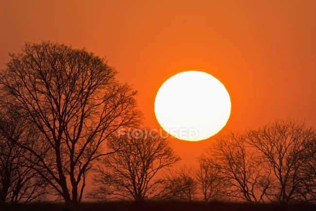 Vue panoramique sur le soleil du soir et les arbres au coucher du soleil Bavière, Allemagne , — Photo de stock