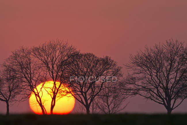 Scenic view of evening sun and trees at sunset Bavaria, Germany, — Stock Photo
