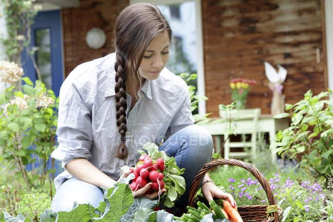 Mujer joven con rábanos rojos en huerto - foto de stock