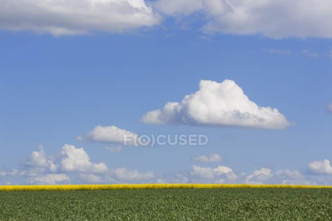 Germania, Baviera, Bassa Franconia, campi con colza e cereali — Foto stock