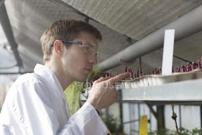 Scientist examining plants in greenhouse — Stock Photo