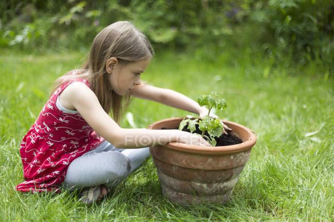 Little girl potting tomato plant in a garden — Stock Photo