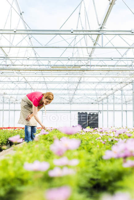 Woman in nursery examining flowers — Stock Photo