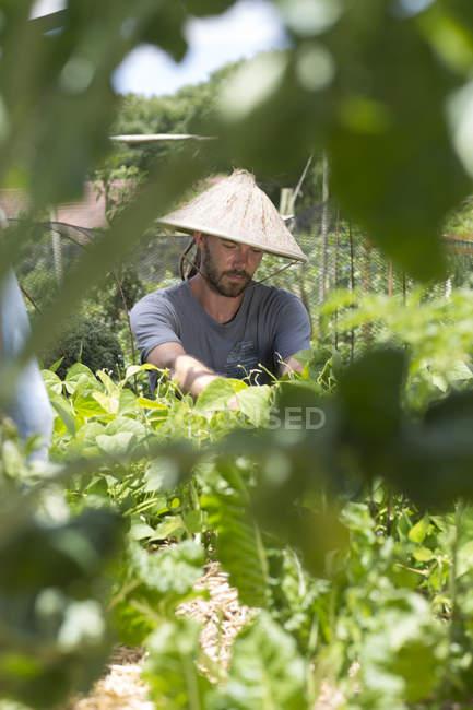 Jardineiro com chapéu asiático trabalhando de dia — Fotografia de Stock