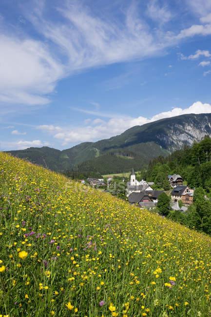 Austria, Lower Austria, Mostviertel, Eisenwurzen, Goestling, flower meadow in Lassing — Stock Photo