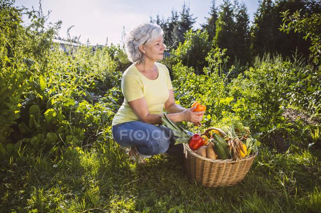 Senior woman with vegetable basket in garden — Stock Photo