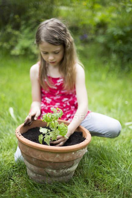 Menina do potting planta de tomate em um jardim — Fotografia de Stock