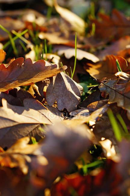 Листья оранжевого дуба лежат на земле в дневное время — стоковое фото
