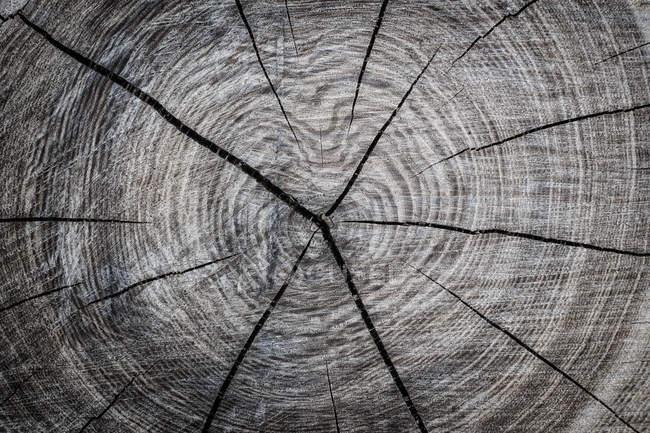 Annual rings of tree trunk, full frame — Stock Photo