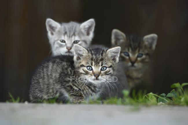 Kätzchen im Freien sitzen und den Blick in die Kamera — Stockfoto