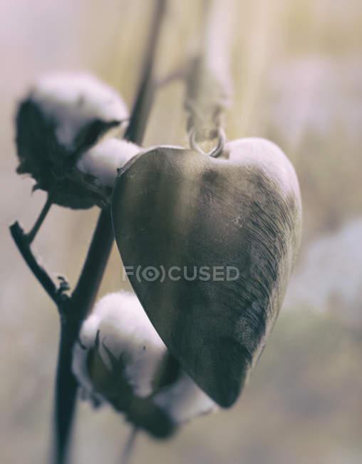 Holzherz hängt vor Baumwollzweig — Stockfoto