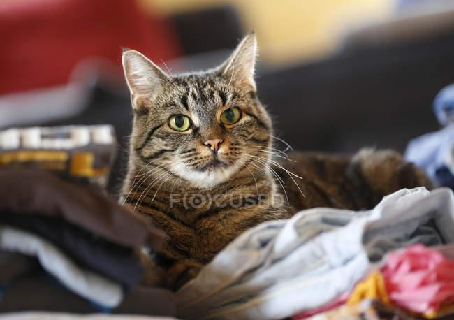 Tabby Gatto seduto sui vestiti e guardando la fotocamera — Foto stock