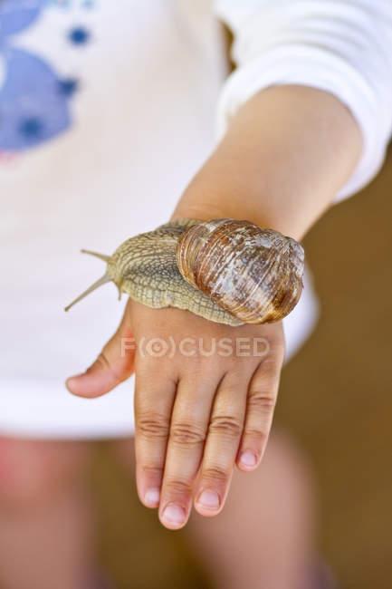 Escargot de Bourgogne sur la main de petite fille — Photo de stock