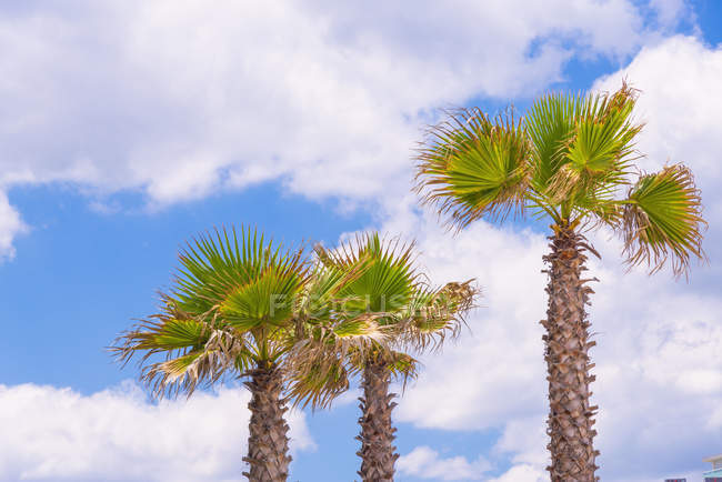 View of Palm trees in bright sunshine and cloudy sky — Stock Photo