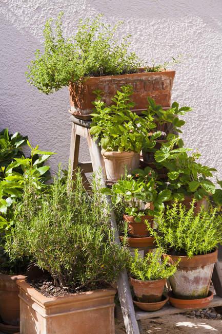 Allemagne, Stuttgart, illet herbes dans le jardin — Photo de stock