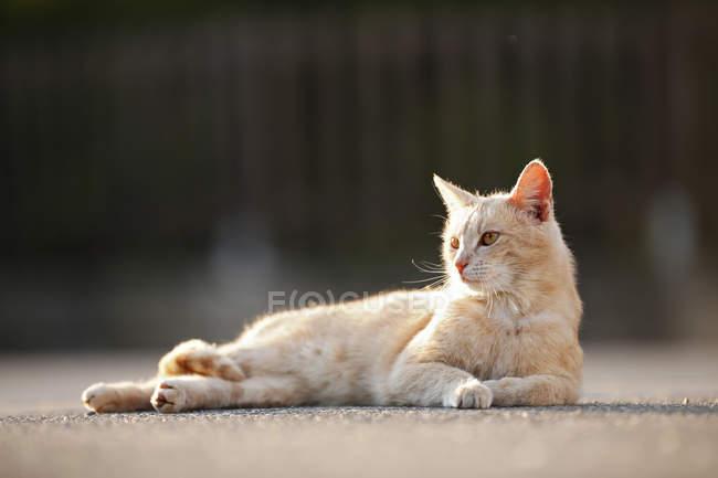 Katze auf der Straße liegen und seitlich suchen — Stockfoto