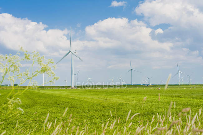 Alemanha, Schleswig-Holstein, Vista das turbinas eólicas no campo verde — Fotografia de Stock