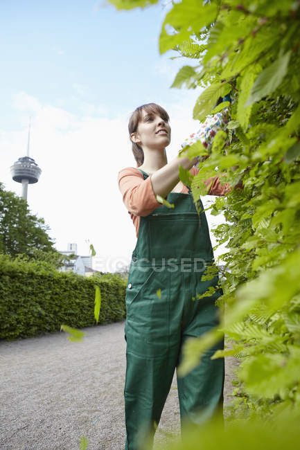 Young woman cutting leaves with shears, smiling — Stock Photo