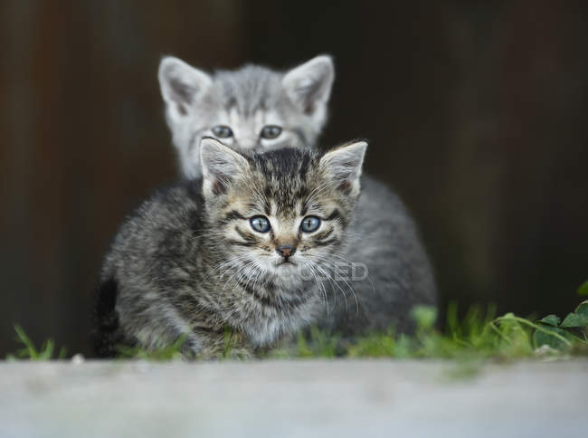 Two kittens sitting outdoors and looking at camera — Stock Photo