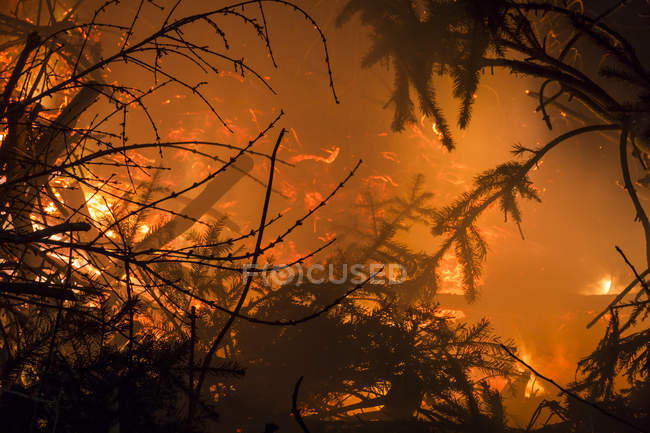 Germany, Forest fire in Heilbad Heiligenstadt — Foto stock