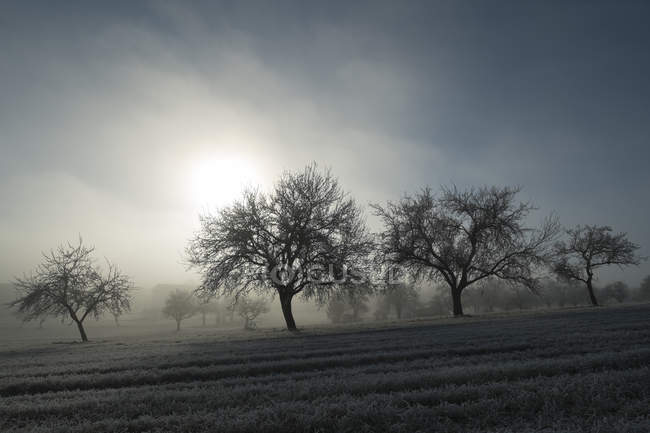 Germany, Baden-Wuerttemberg, Tuttlingen district, meadow with scattered fruit trees and wafts of mist — Stock Photo