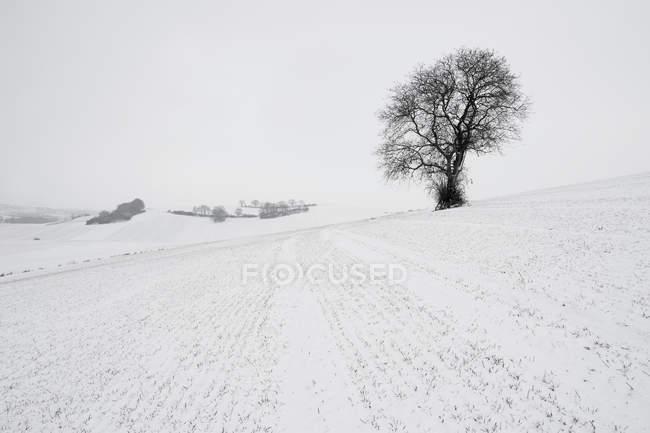 Germany, Rhineland-Palatinate, Neuwied, snow covered winter landscape with single tree — Stock Photo