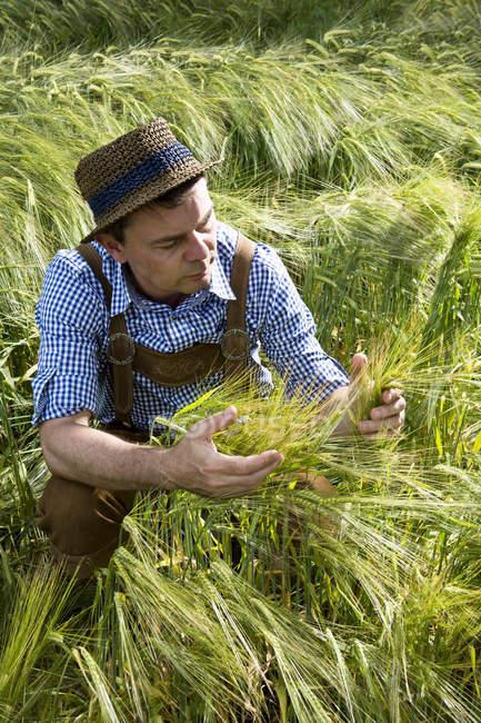 Agriculteur récolte en champ dans la journée — Photo de stock