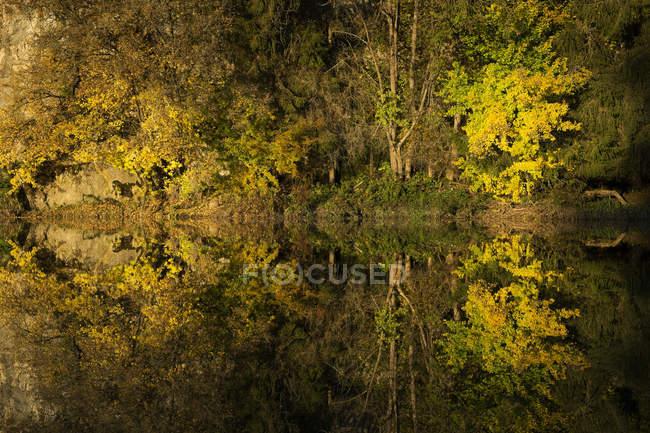 Riflessione dell'acqua del bosco autunnale del parco naturale del Danubio, Germania — Foto stock