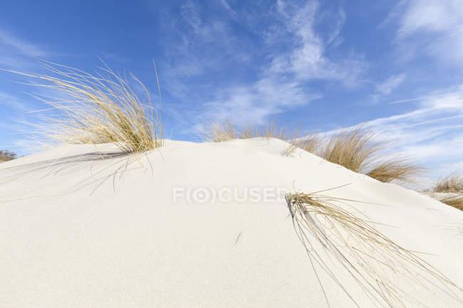 Німеччина, Нижня Саксонія, Східної Фризії, Borkum, dune та marram трави — стокове фото