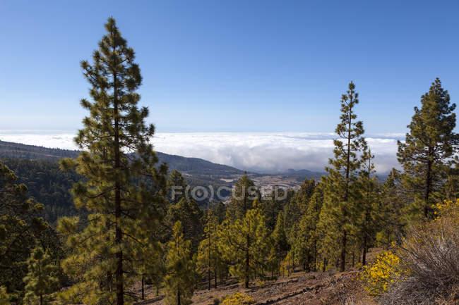España, Vista del Parque Nacional Corona Forestal - foto de stock