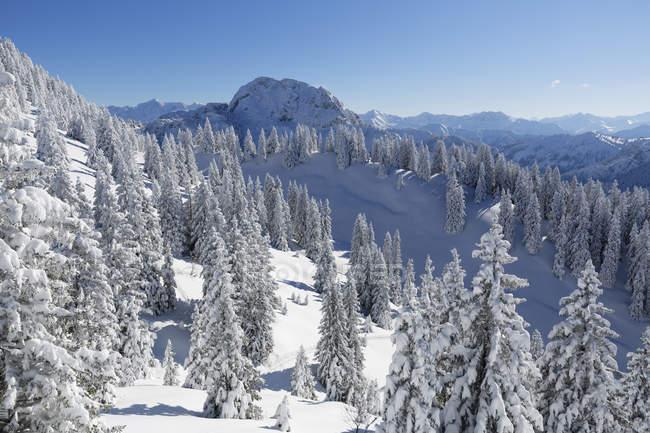 Allemagne, Bavière, enneigée sapins au Mont Tegelberg — Photo de stock