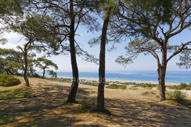 Турция, Ликии, сосны на песчаных дюнах недалеко Патара в дневное время — стоковое фото