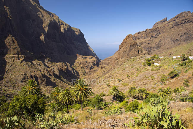 Tenerife, Teno Mountains, Masca, view of plain field with plants and rock during daytime — Stock Photo