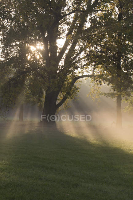 Allemagne, Bavière, Fermeture terrestre, arbres et brouillard matinal — Photo de stock
