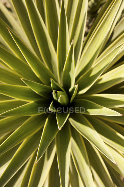 View of palm cactus, full frame — Stock Photo