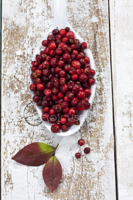 Fresh Cranberries on big spoon on shabby wooden surface — Stock Photo