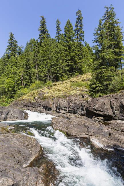 Canadá, Columbia Británica, Isla Vancouver, Parque Provincial Elk Falls - foto de stock