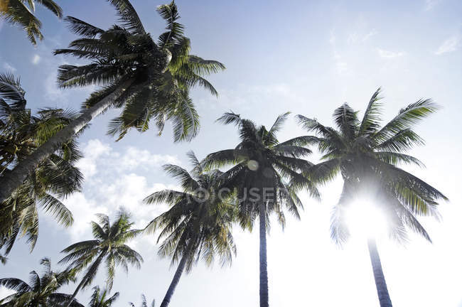 Кокосовые пальмы на солнце — стоковое фото
